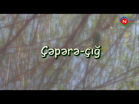 Çəpərə-çığ televiziya filmi