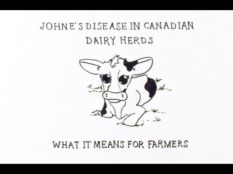 Video Johne's Disease in Canadian Dairy Herds: What it means for farmers