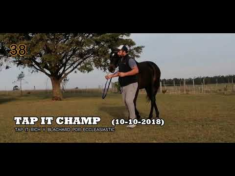 Lote TAP IT CHAMP