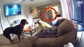شاهد ماذا تفعل الكلاب عند رؤية الجن +18 !!