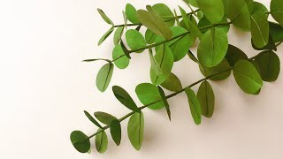 ABC TV | How To Make Eucalyptus Leaf Paper With Shape Punch - Craft Tutorial