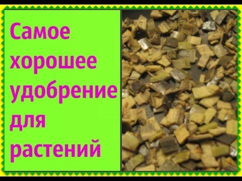 Детский сад 30 веснушки в балашихе