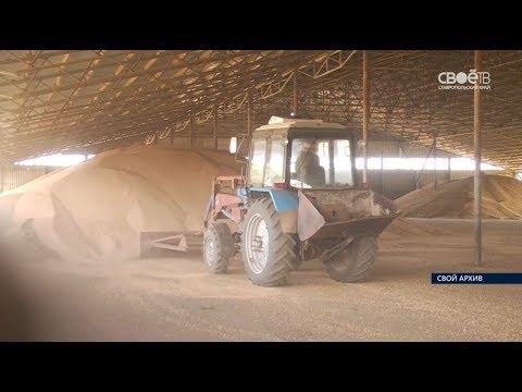 40 миллионов рублей потерял директор одного из сельхозпредприятий на продаже зерна