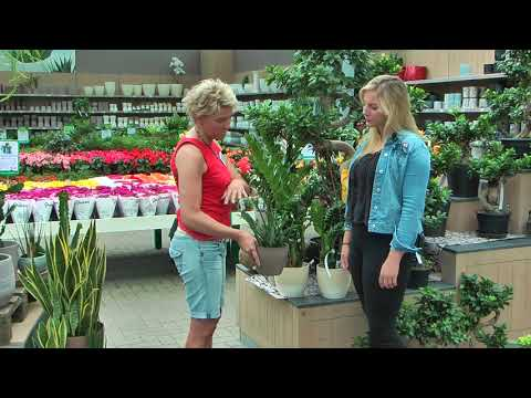 Tipps über pflegeleichte Zimmerpflanzen - Gartencenter Rostock
