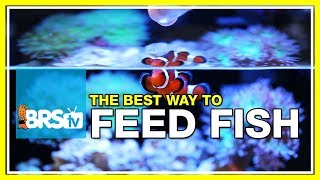 Week 41: Feeding fish - Selecting food for maximum health & longevity | 52 Weeks of Reefing #BRS160