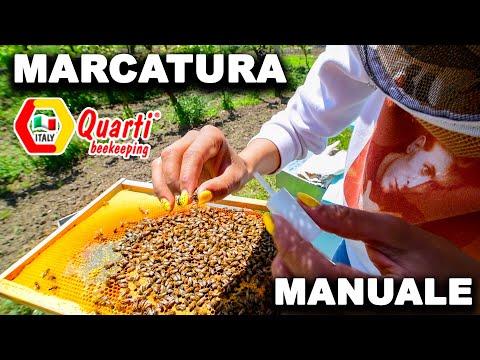 , title : '❌🍀🐝🌈 Apicoltura: MARCATURA APE REGINA  🇮🇹🐝🌈❌Basi Diario dell'Apicoltore Principiante Inizio