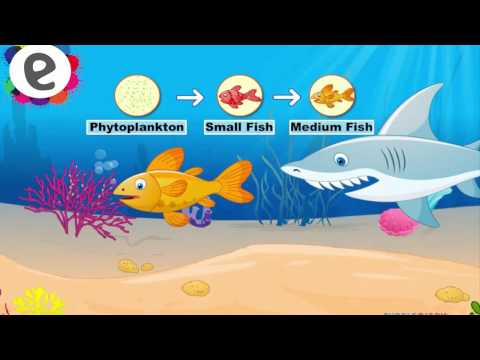 Science Videos - Food Chain - Kids Second Grade