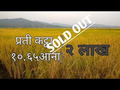 धेरै सस्तो जग्गा/2 लाख प्रति कठा जग्गा तुरुन्तै बिक्री/Cheapest land sale/2 lakhs per kattha,ढल्के
