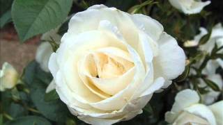 Mario Lanza - Roses Of Picardy