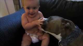 Pit Bull makes ticklish baby laugh