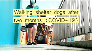Shelter dogs react to human's visit after 2 months (COVID-19 in SG)