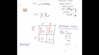 Mon 3/3 -Punnett Square Practice Problem