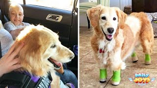 She Has No Legs But She's The Perfect Service Dog For This 10-Year-Old