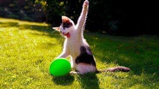 Смешные кошки 2019 Новые приколы с котами и собаками, смешные коты приколы 2019 funny cats #71