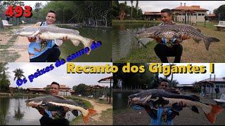 Os peixes de couro do Recanto dos Gigantes I - Fishingtur 493