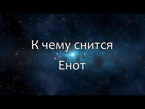 К чему снится Енот (Сонник, Толкование снов)