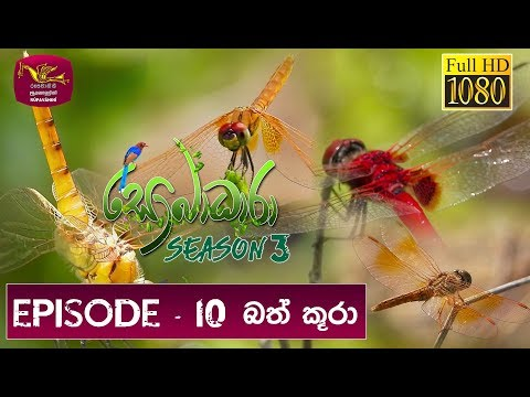 Sobadhara Rupavahini | 2019-05-17 | Dragon Fly