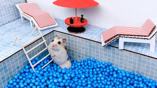 Pool maze for cute Hamster - playground for pets in real life