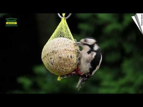 Berny Bird® - Riesen-Meisenknödel in Netz (500g)