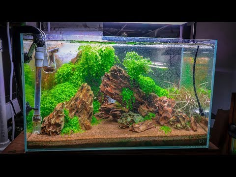TOP 5 EASY CARPETING AQUARIUM PLANTS