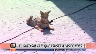 El exótico animal que asusta a Las Condes