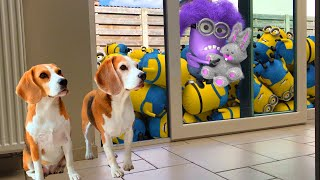 💜🍌DOGS vs MINIONS IN REAL LIFE!🍌💜 Funny Dogs Louie & Marie