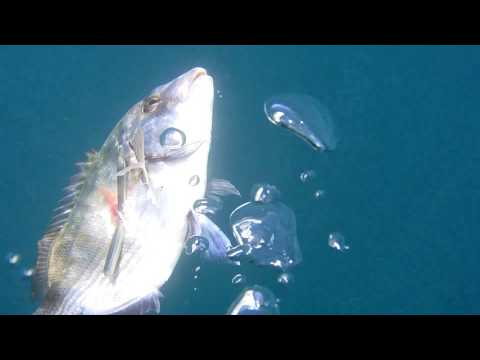 La pesca su video urga