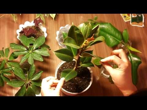 МОИ ЦВЕТЫ! Как я начала разводить комнатные растения.