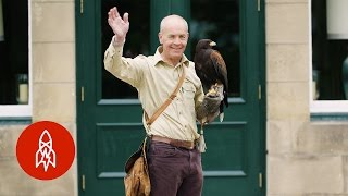 How Falconry Shaped the English Language