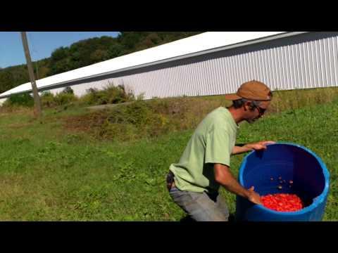 Isang bata 3 taong gulang worm na gawin