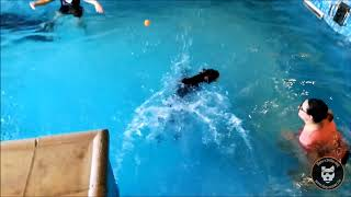 Dog pool : un collectif adulte hors norme !