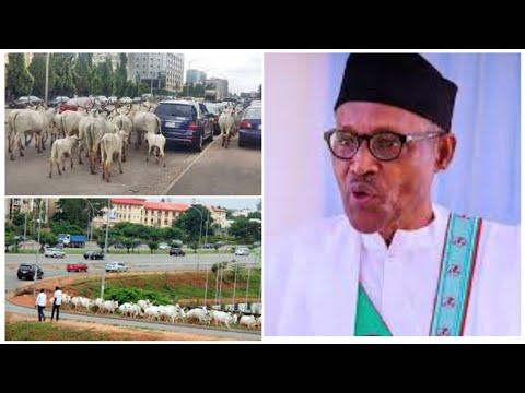 , title : 'SHAMEFUL: BUHARI WATCHES HOW COWS TAKE CHARGE OF NIGERIA CAPITAL CITY