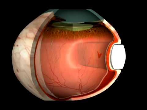 Упражнения на восстановление зрения по бейтсу