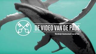 De bescherming van de oceanen