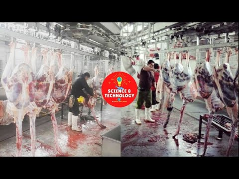 , title : 'Amazing Ostrich Farm Around The World-Ostrich Slaughterhouse-Ostrich Products Factory Processing