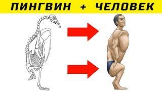 Как Выглядел бы Человек со Скелетом Разных Животных