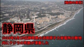 静岡県の浜岡原子力発電所の敷地内にクジラの死骸が漂着