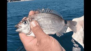 Морские рыбалка в сочи с берегами