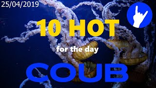 Hot Ten COUB for 25/04/2019