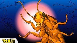 【衝撃】ゴキブリが最強の生物である理由