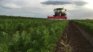 Pielnik Herbicydowy 4x75F Odchwaszczanie Marchwi + VALTRA N82H ( Weeding Carrot )