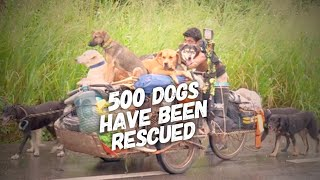 Spent 6 Years Rescuing Dogs In Mexico - This Man Never Give Up One