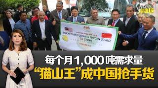 冷冻带壳榴梿出口中国 大马料每年进账5亿