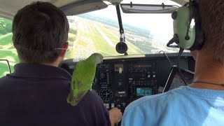 Kili Senegal Parrot - Flying into Oshkosh in Mooney M20J