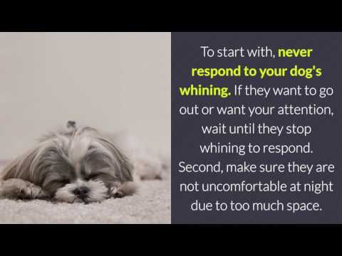 Why Some Dogs Whine At Night And How To Stop It