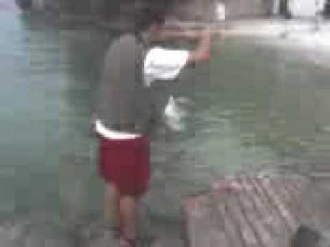 Guardare il video che pesca nellinverno del 2015