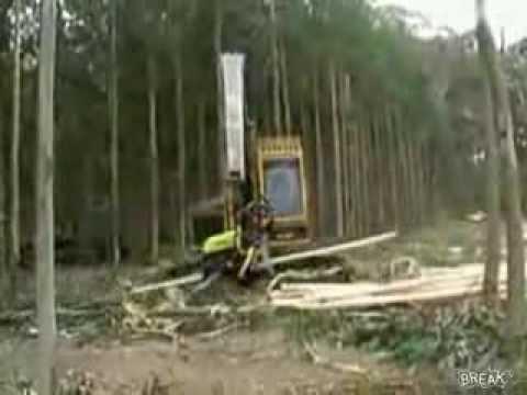 Máy đốn cây quá bá đạo