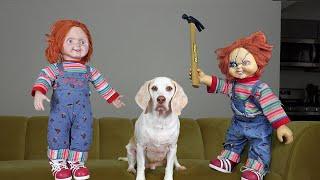 Good Chucky vs Bad Chucky w/Funny Dog Maymo