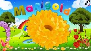 """flower names"" in animation video for kids and children"