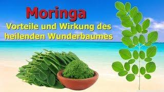 Moringa - Vorteile und Wirkung des heilenden Wunderbaumes